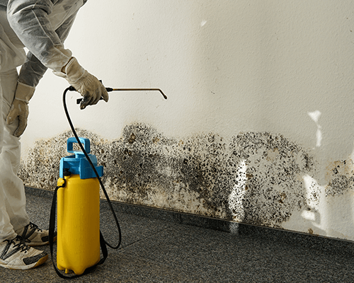 Mold and Mildew Cleaning Brooklyn