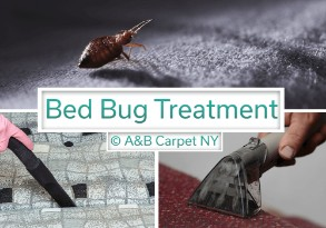 Bed Bug Treatment - Mill Island 11234